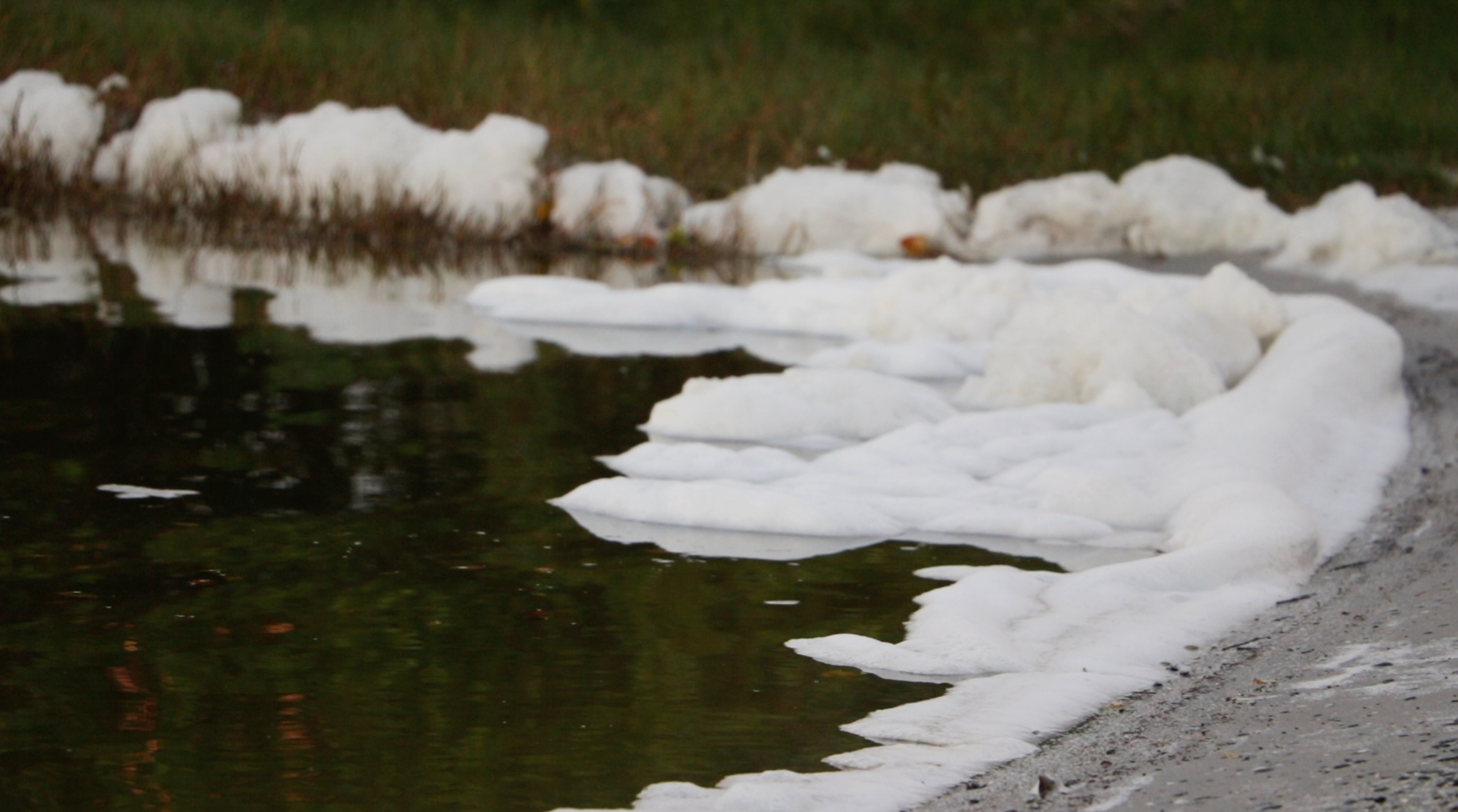 photo of foam on a Florida body of water, potentially caused by PFAS
